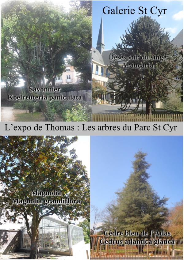 Les arbres du Parc St Cyr